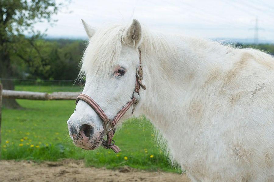 Bild_Pony