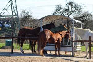 Pferde.3